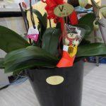 胡蝶蘭とサンタ